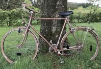 Ein Fahrrad lehnt an einem Baum.